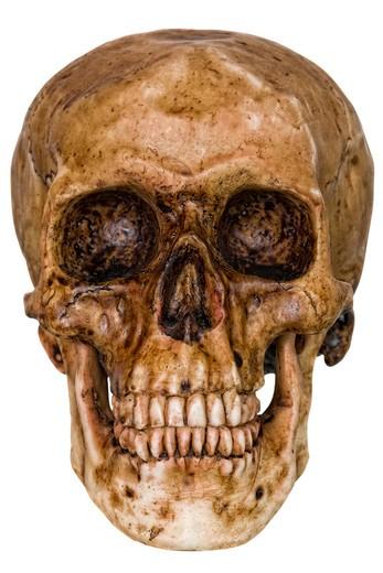 Stock Photo: 1598R-9991068 Halloween Skull