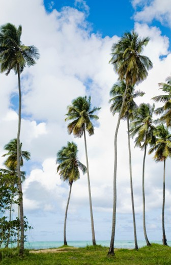 Stock Photo: 1598R-9991618 Palm trees on grassy knoll by beach on Caribbean Ocean in San Juan Puerto Rico