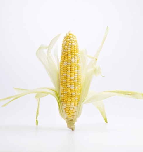 Stock Photo: 1598R-9991682 ear of corn on white background