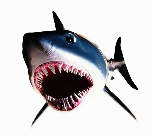 Model of a Great White Shark with its mouth open wide : Stock Photo