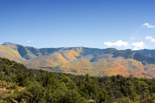 Fall colors on New Mexico mountains. : Stock Photo