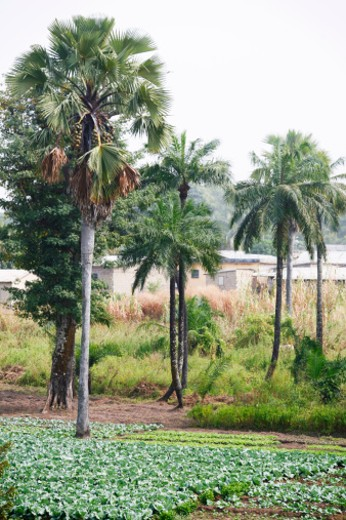 west african landscape. Kara, Togo. : Stock Photo