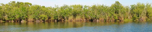 Stock Photo: 1598R-9999068 Panoramic view of mangrove forest ecosystem, Everglades National Park, Florida, USA. Near Flamingo Visitor Center. UNESCO World Heritage Site Biosphere Reserve.