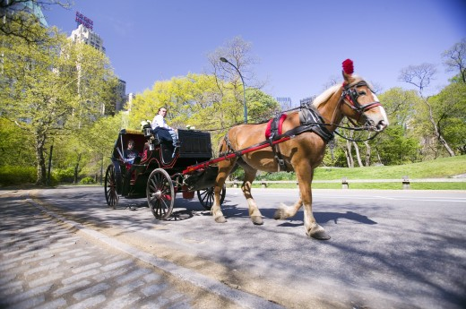 Stock Photo: 1599-11279 Horse and carriage drives through Central Park Manhattan, New York City, New York