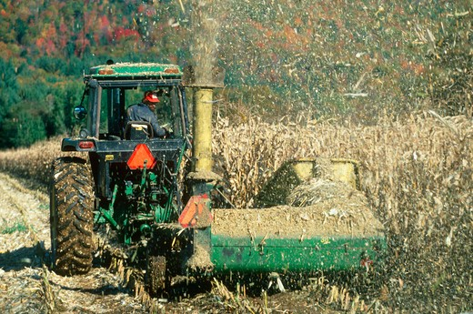 Tractor cutting down dried corn fields in autumn, New England : Stock Photo