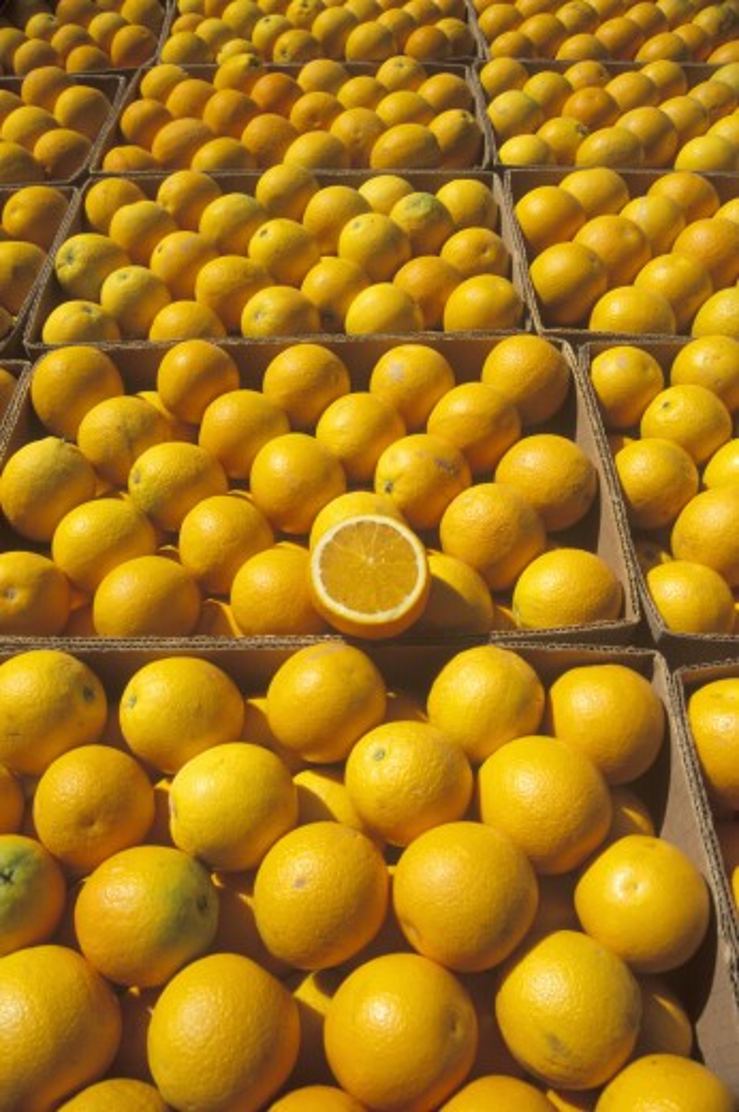 Orange boxes line up in Ventura County, CA  : Stock Photo