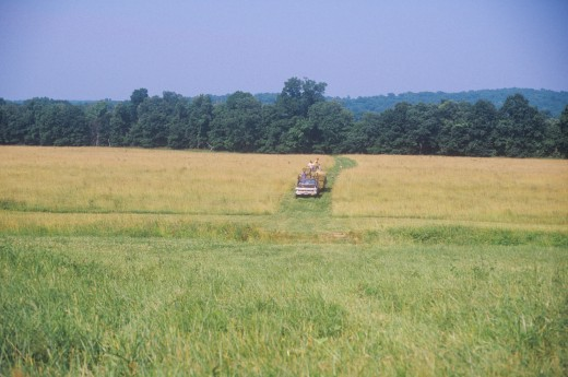 Farm machinery mowing in field : Stock Photo