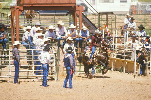 Calf roping, Inter-Tribal Ceremonial Indian Rodeo, Gallup NM : Stock Photo