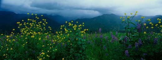 Stock Photo: 1599-7098 These are spring wildflowers under a stormy sky.