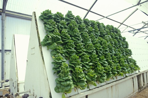 Hydroponic lettuce farming at the University of Arizona Environmental Research Laboratory in Tucson, AZ : Stock Photo