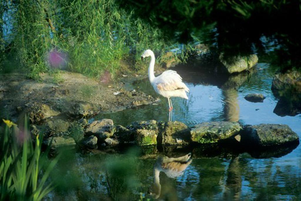 Stock Photo: 1599-8531 Flamingo in Bellingrath Gardens, AL