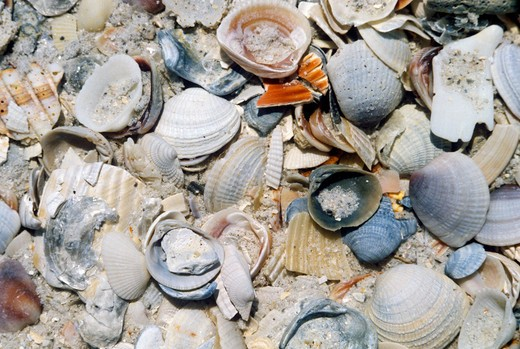 Pile of Sea Shells In The Sand, California : Stock Photo