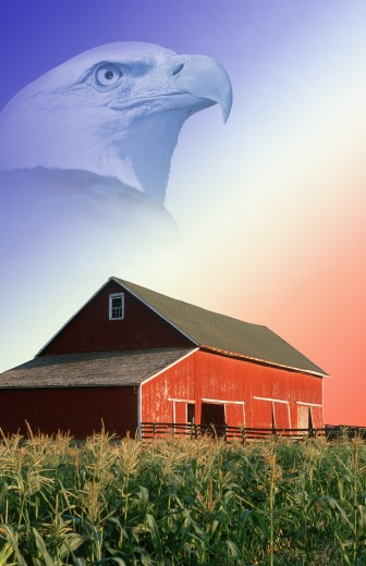 Stock Photo: 1599R-23040 Photo montage: Red barn, corn field, and American eagle