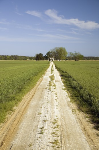 Stock Photo: 1599R-26069 Dirt driveway leading through a field of green grass to farm house on the Eastern Shore of Maryland