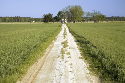 Dirt driveway leading through a field of green grass to farm house on the Eastern Shore of Maryland : Stock Photo
