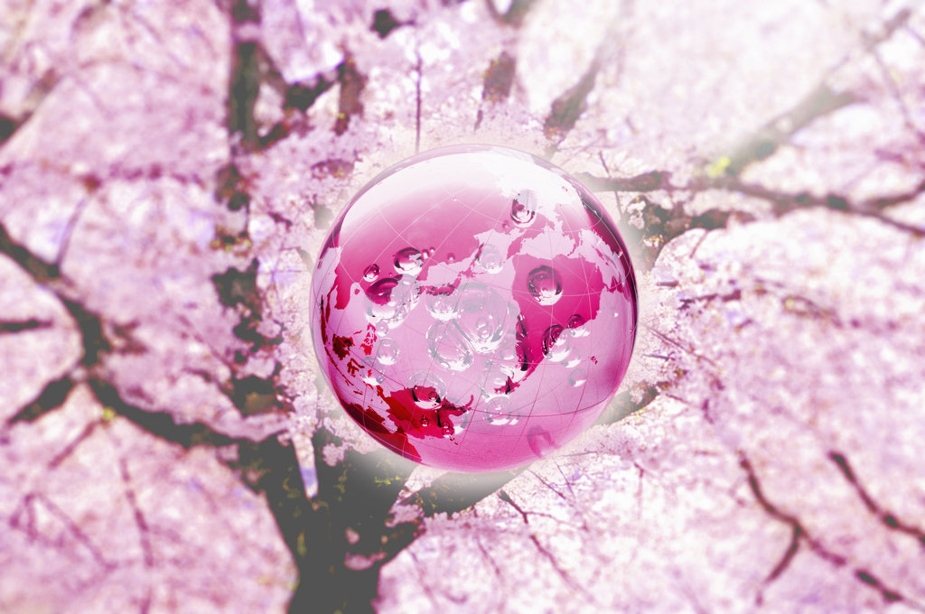 Globe in cherry blossom, digitally generated image : Stock Photo