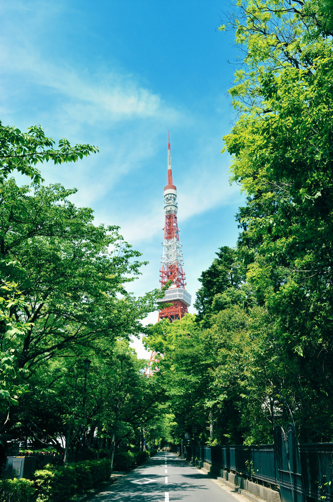 Japan, Tokyo, Treelined street with Tokyo tower in background : Stock Photo