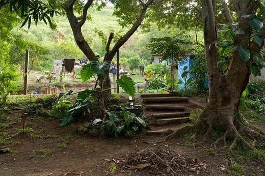 Stock Photo: 1606-102704 New Caledonia, Noumea, squat Sakamoto