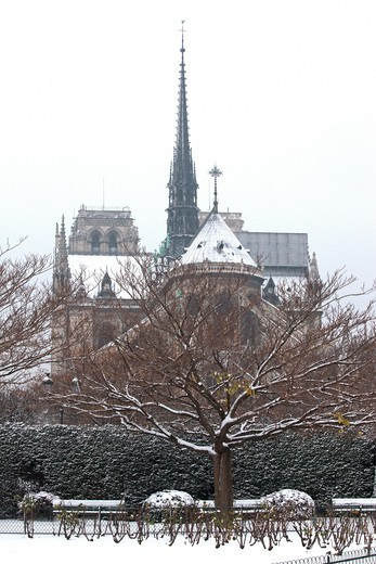 Stock Photo: 1606-104619 France, Paris in winter, Ile de la Cit, Square de l'Ile de France, Notre Dame cathedral