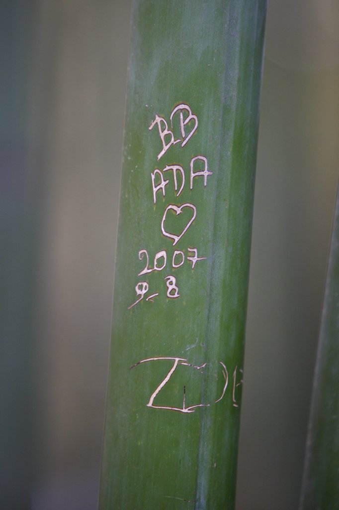 Stock Photo: 1606-105430 France, Gard, Anduze, Bamboo
