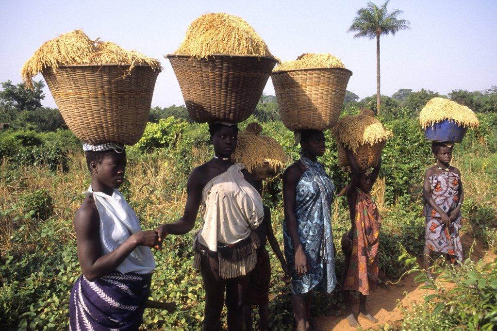 Africa, West Africa, Guinea-Bissau, Bijagos archipelago, Canhabaque island (or Roxa island) : Stock Photo