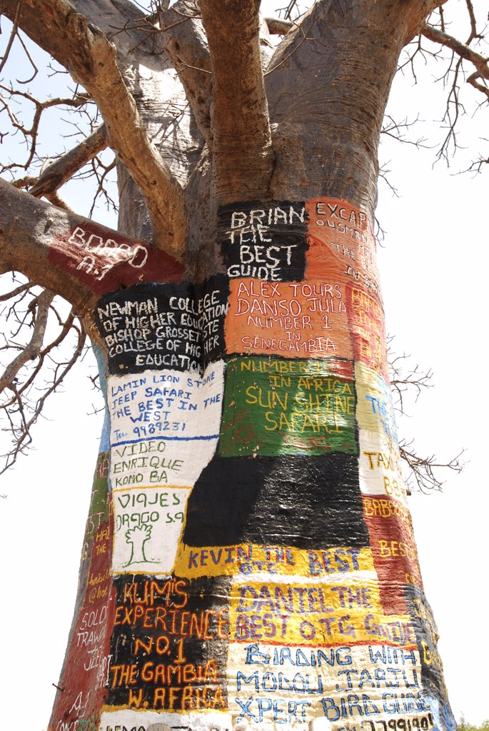 Africa, Gambia, painted billboard advertising  tree : Stock Photo
