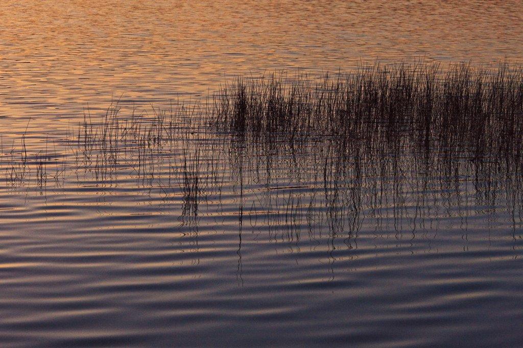 Aquatic herbs : Stock Photo