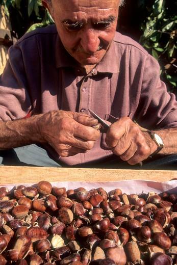 Stock Photo: 1606-107508 France, Limousin, Correze (19), Meyssac, chestnuts