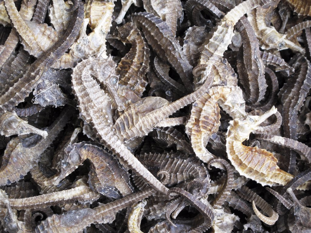 Stock Photo: 1606-113855 China, Guangdong province, Guangzhou, market, dried seahorses
