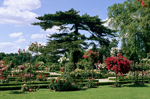 France, Paris, Bois de Boulogne, Bagatelle park, rose garden : Stock Photo