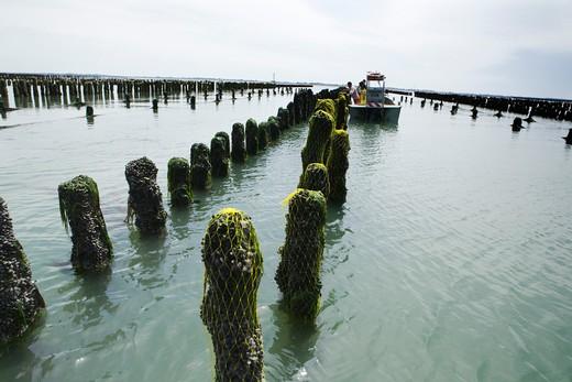 France, Vend?e, Ile de Noirmoutier, mussel farming : Stock Photo