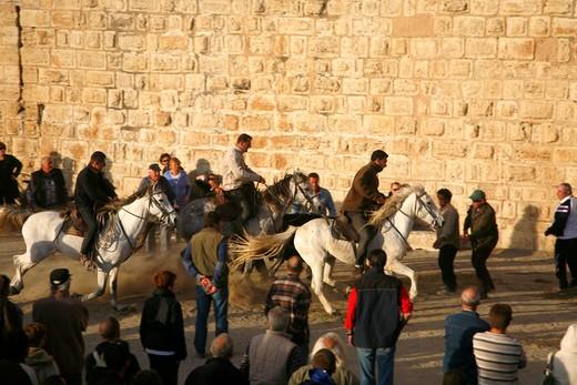 France, Languedoc-Roussillon, Gard (30) Camargue, Aigues-Mortes, camarguaise race : Stock Photo
