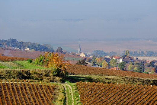 Stock Photo: 1606-123301 France, Champagne, Marne, Oeuilly, vineyard and village