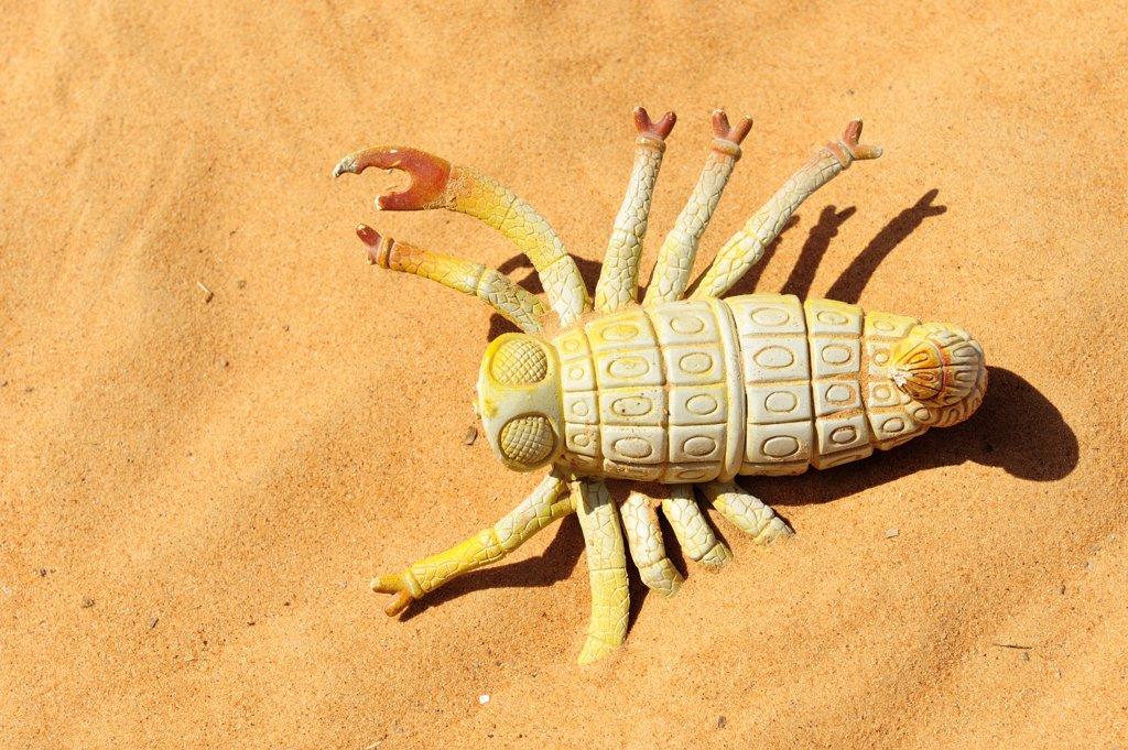 Stock Photo: 1606-124901 Sultanate of Oman, Ash Sharqiyah, Wahiba Sands, plastic beetle