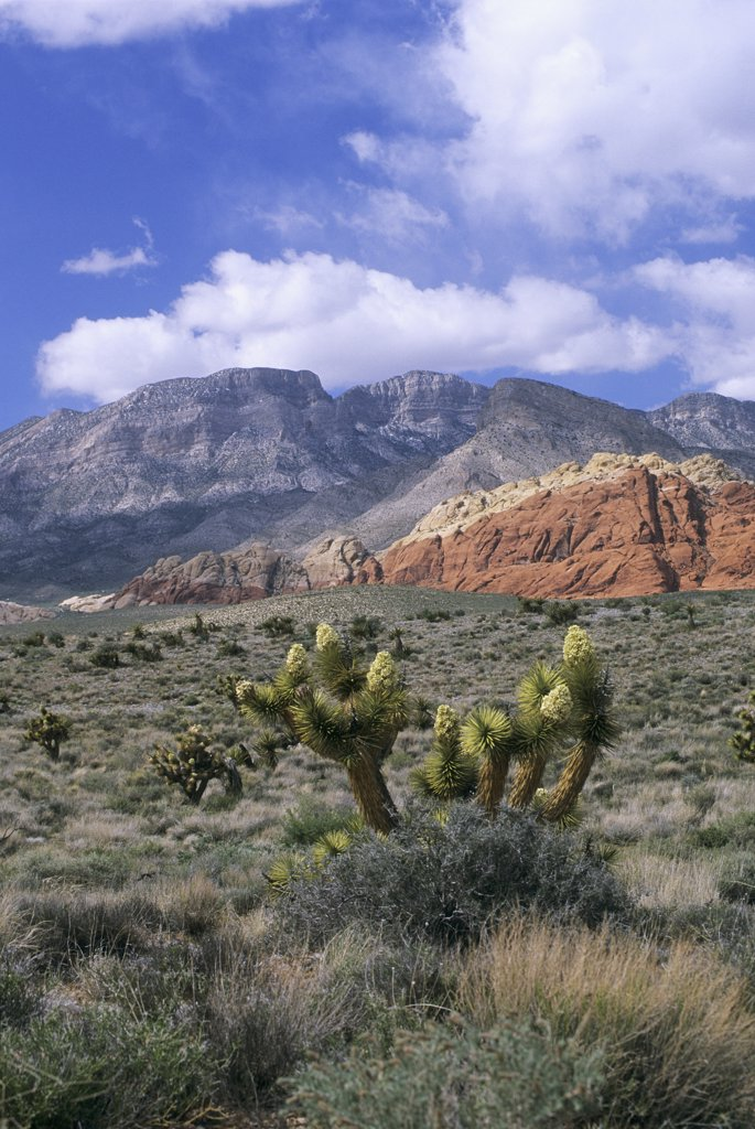 USA, Nevada, Red Rock Canyon : Stock Photo