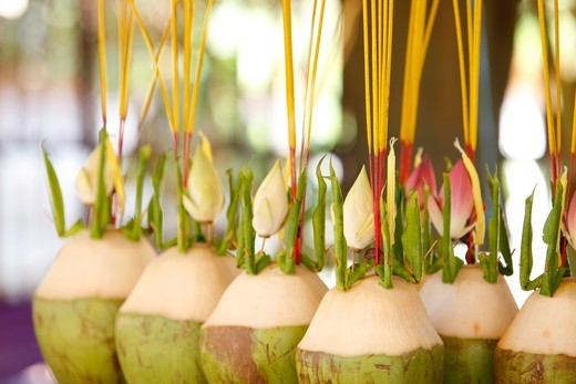 Cambodia, Siem Reap, Siem Reap, Coconut offerings  Cambodia. : Stock Photo