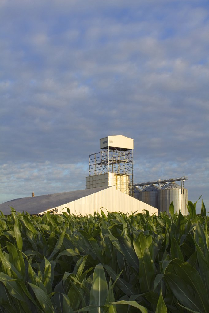 Stock Photo: 1606-128640 France, corn field and farmer's co-op