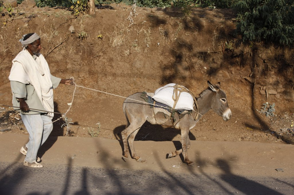 Stock Photo: 1606-128970 Ethiopia, Wollo, Lalibela. Man with donkey Ethiopia.