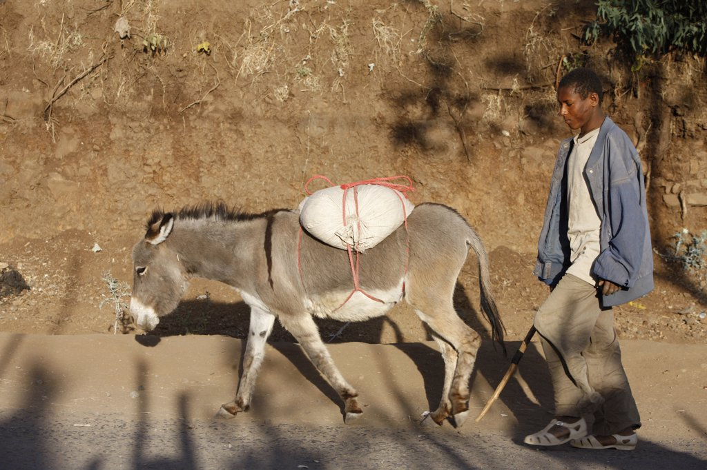 Ethiopia, Wollo, Lalibela. Young man with donkey Ethiopia. : Stock Photo