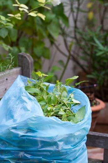 Stock Photo: 1606-133210 Plants in garbage bag