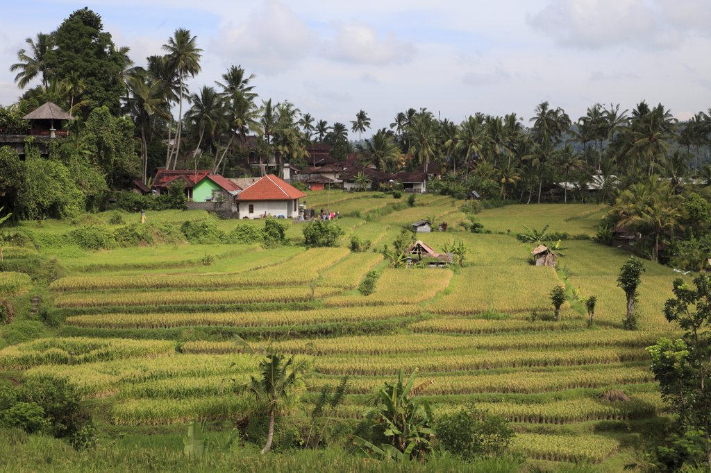Indonesia, Bali, terraced rice fields, farmhouses, : Stock Photo