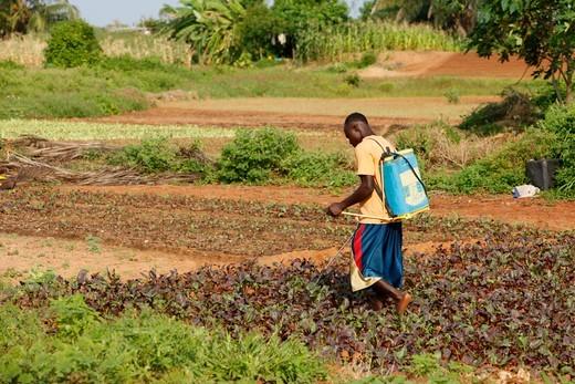 Stock Photo: 1606-137105 Togo, Lomé. African farmer. Togo.