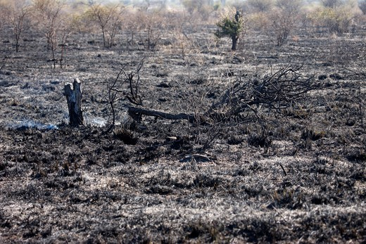 South Africa, North West Province, Madikwe. Madikwe game reserve. Fire. South Africa. : Stock Photo