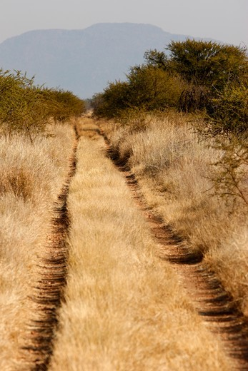 South Africa, North West Province, Madikwe. Dirt road in the bush. South Africa. : Stock Photo