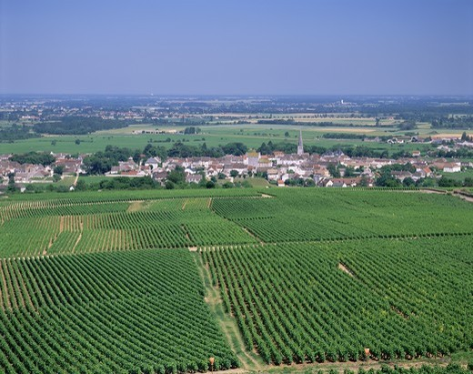 France,Burgundy,Mersault Village and Vineyards : Stock Photo