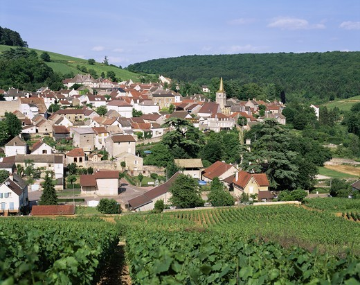 France,Burgundy,Pernand Verglesses Village and Vineyards : Stock Photo