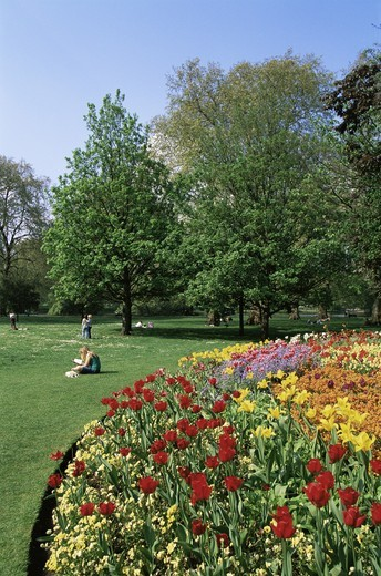 England,London,Spring Blossom in St.James Park : Stock Photo