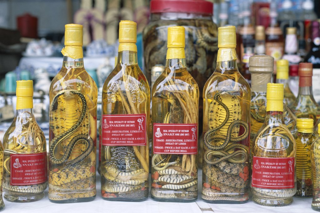 Vietnam, Ho Chi Minh City (Saigon), Bottles of Snake Herbal Medicine / Snake Wine : Stock Photo
