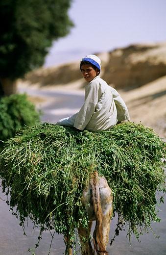 Egypt, Minieh district, boy on a donkey : Stock Photo
