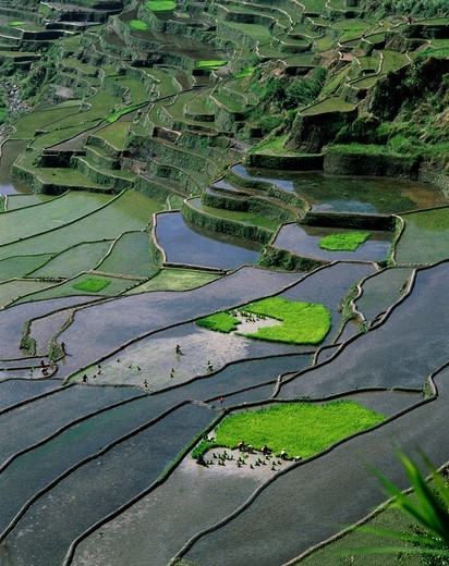 Stock Photo: 1606-146605 Philippines, Quezon, Banaue, Rice Terraces